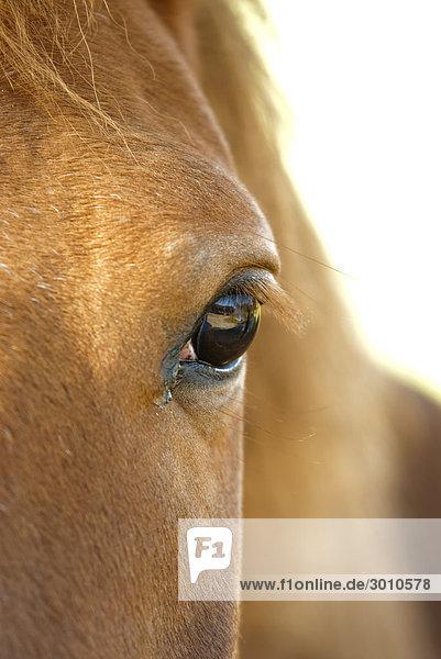 Linkes Auge eines hellbraunen Pferdes  Close-up