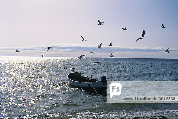 Vögel fliegen über ein Fischerboot auf dem Meer.