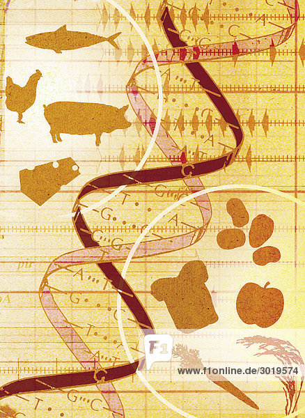 Collage of animals  food and DNA helix