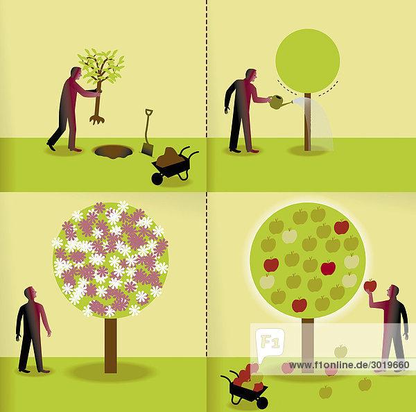 Collage eines Mannes  der einen Baum pflanzt und pflegt