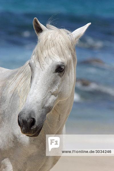 Pony horse - portrait