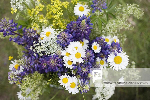 Blumen-Schweden