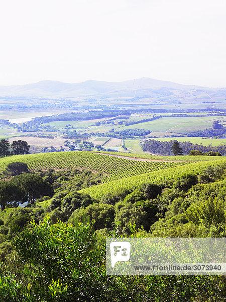 Blick über ein Weinbaugebiet Süd-Afrika.