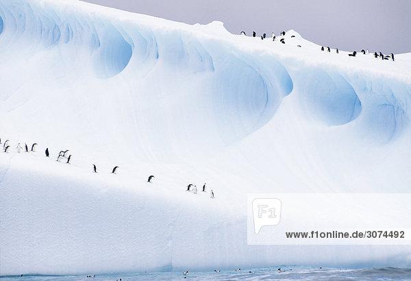 Penguin stehend auf Eisberg Penguin stehend auf Eisberg
