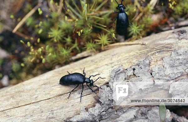 Insekten auf Baumstamm