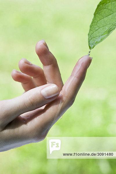 Ein Finger fängt tropfendes Wasser von einem Blatt auf. Ein Finger fängt tropfendes Wasser von einem Blatt auf.