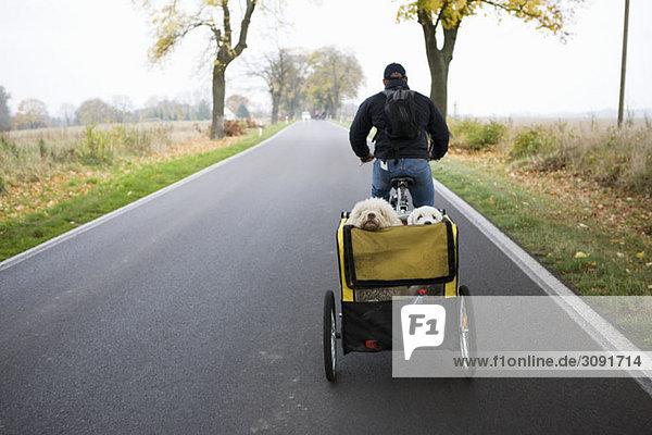 Ein Mann auf einem Fahrrad  der einen Anhänger mit zwei Hunden zieht.