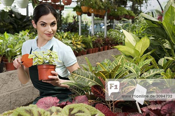 Frau halten Pflanze Treibhaus Topfpflanze