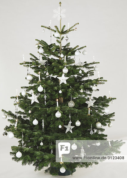 advent baum baumschmuck botanik christbaum ereignis. Black Bedroom Furniture Sets. Home Design Ideas