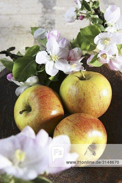 Drei Äpfel mit Apfelblüten