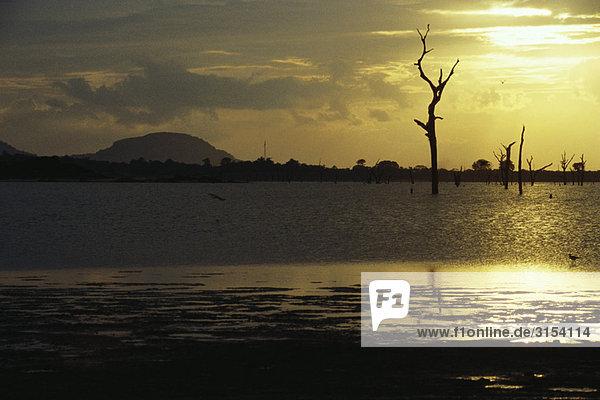 stehend Silhouette See kahler Baum kahl kahle Bäume