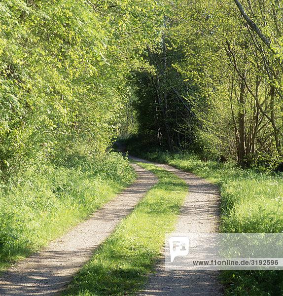 Road amid trees