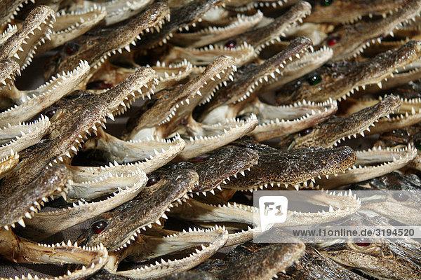 Krokodile als Souvenirs  New Orleans  USA  Close-up
