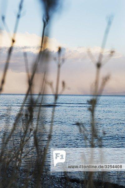 Der Ozean am Abend  Skane  Schweden.