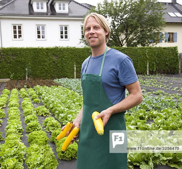Mann erntet gelbe Zucchini