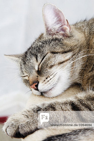 Hauskatze  schlafende Katze
