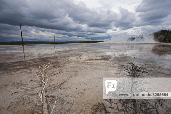 USA  Wyoming  Yellowstone Nationalpark  Grand Prismatic Spring mit toten Bäumen