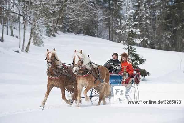 Österreich  Salzburger Land  Paartransport Weihnachtsbaum auf Schlitten  lächelnd  Portrait
