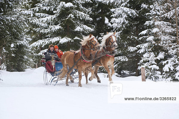 Austria  Salzburger Land  Couple riding in sleigh