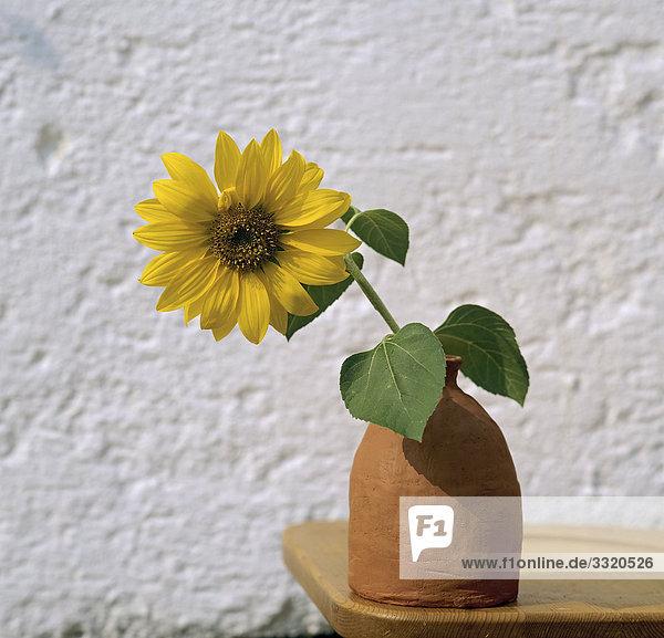 Sonnenblume in Vase
