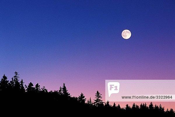Abenddämmerung,Astronomie,Aussen,Baldachin,Baum