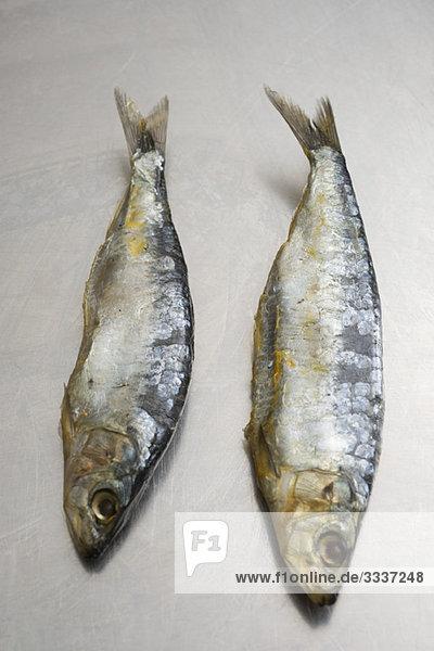 Zwei Sardinen