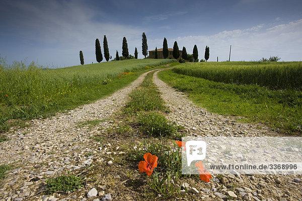 Kornfeld Blume Wohnhaus Baum Italien Pienza Mohn Toskana Weg