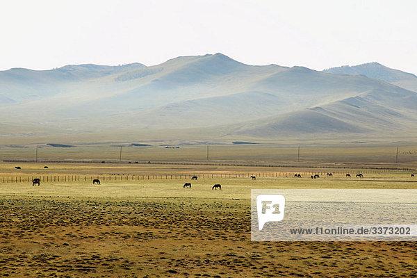 Mongolische Steppenlandschaft