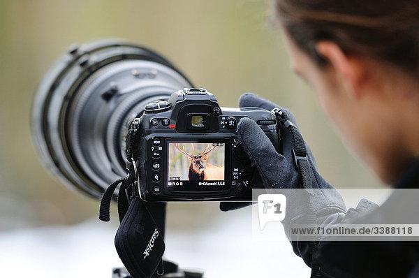 Fotograf mit einer Kamera  Bayern  Deutschland  Rückansicht