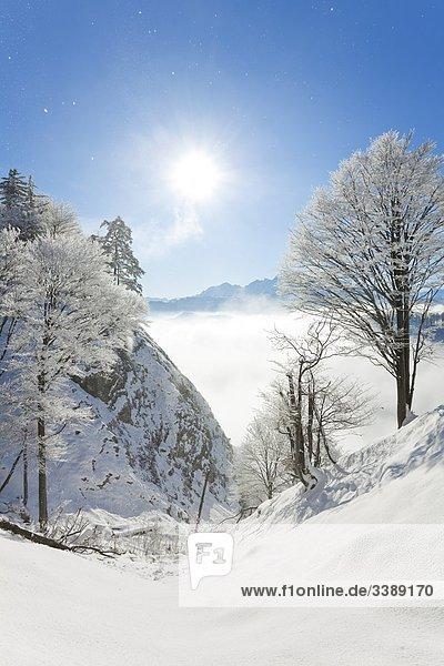 Berglandschaft am Untersberg in den Berchtesgadener Alpen  Berchtesgaden  Deutschland