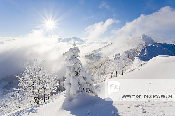 Winterlandschaft in den Ostalpen  St. Koloman  Österreich