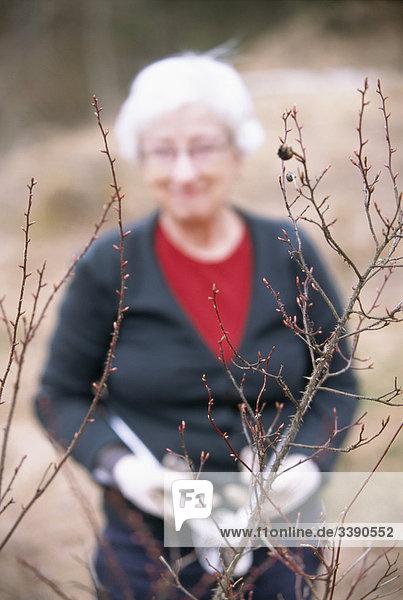 Frau Baum Apfel