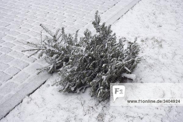 Tanne auf Winter Straße ausgelöst