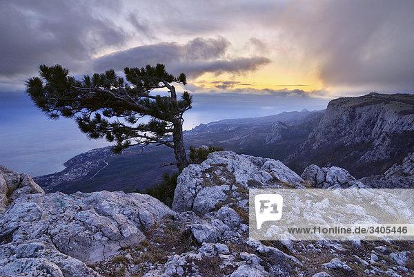 einsamer Baum auf der Berg AJ-Petri auf Krim