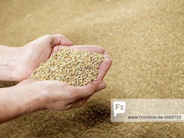 Eine Handvoll Weizen