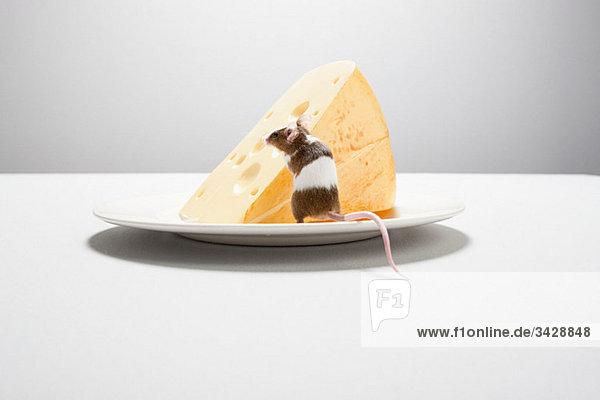 Maus und Käse auf dem Teller