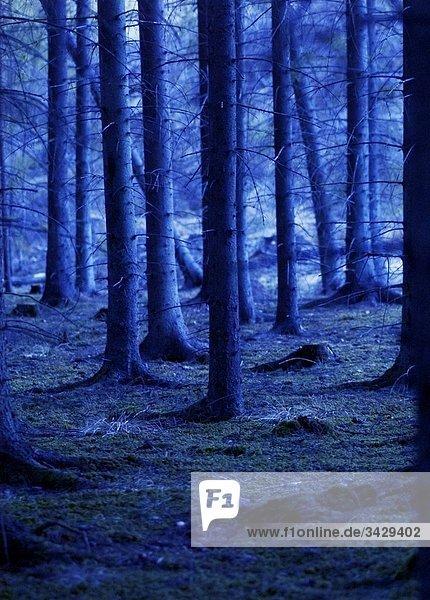 Baum Wald
