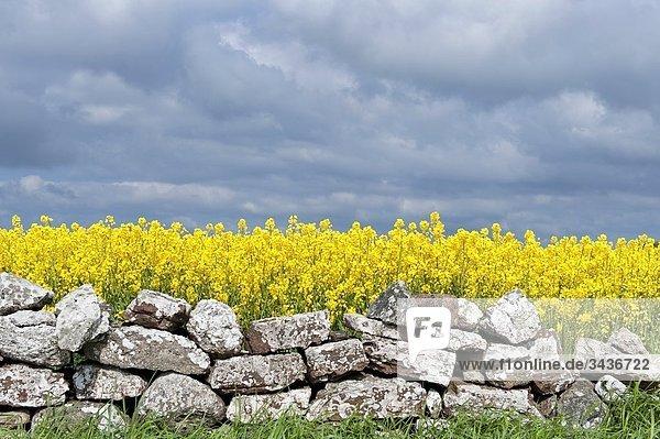 Steinmauer  Feld  Schweden