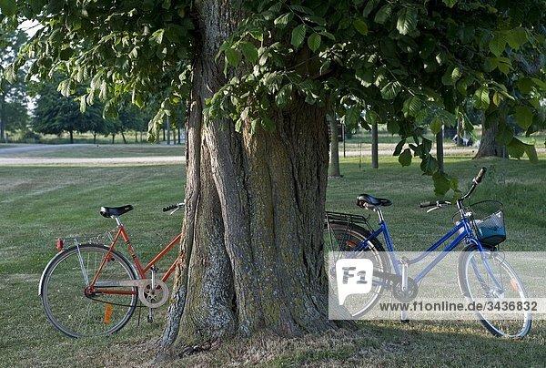 Zwei Fahrräder stehen neben einem Baum. Schweden
