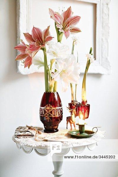 Amaryllis in a vase  Sweden.