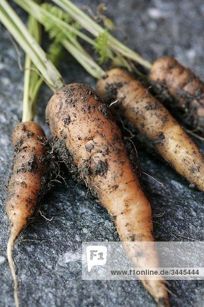 Blick auf Karotten abgedeckt mit dem Boden  Nahaufnahme Blick auf Karotten abgedeckt mit dem Boden, Nahaufnahme
