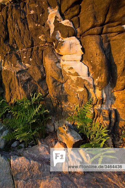 England  Northumberland  Kyloe Hills Native ferns below an impressive Sandstone formation found on the Kyloe Hills