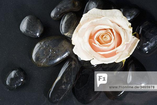 Eine Rose auf Lastone Therapiesteinen liegend