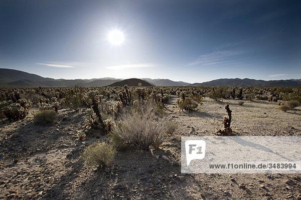 Joshua Tree Nationalpark  Kalifornien  USA  Erhöhte Ansicht