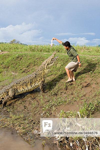 Mann füttert ein Krokodil in Costa Rica