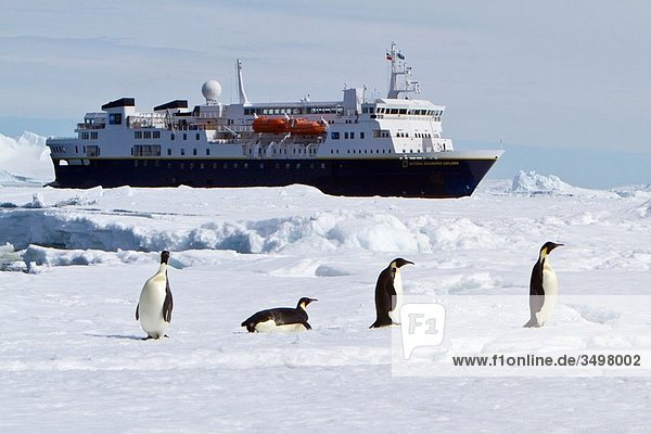 The Lindblad Expedition Ship National Geographic Explorer operating in Antarctica in the summer months The Lindblad Expedition Ship National Geographic Explorer operating in Antarctica in the summer months