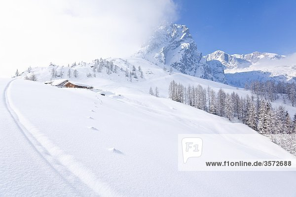 Die Mitterfeldalm am Hochkönig  Berchtesgadener Alpen  Österreich