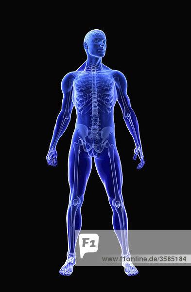 Körpermodell eines Mannes