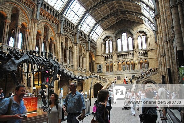Natural History Museum main hall. South Kensington  London  Great Britain  Europe