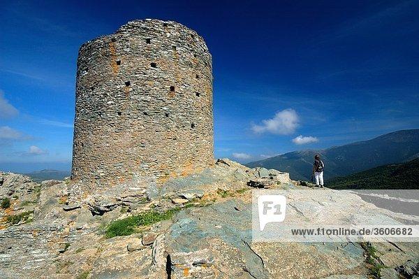 Europa - Frankreich - 20 Corsica - Cape Corse - Genueser Turm - Corsica - Haute Corse - Pino - Seneque Tower - Haute-Corse - Kiefer